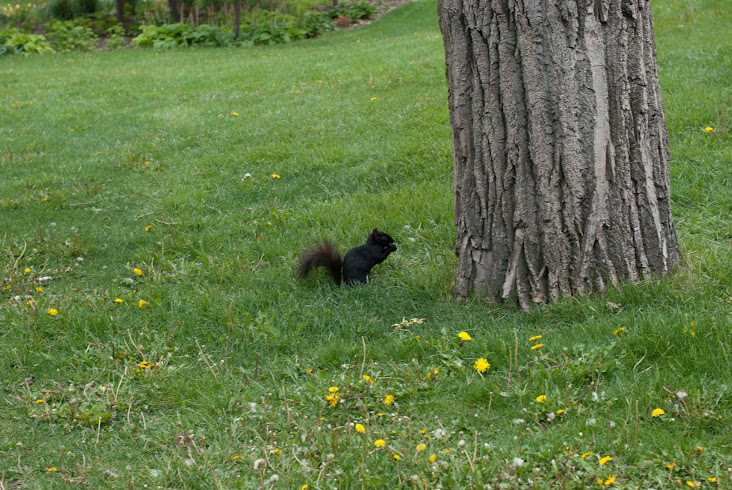Squirrel in Prince's Island Park in Calgary