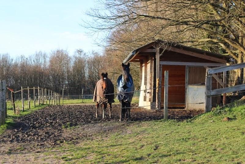 Aménagement de mon paddock hors boue. Solution trouvée pour cet hiver !! IMG_9956