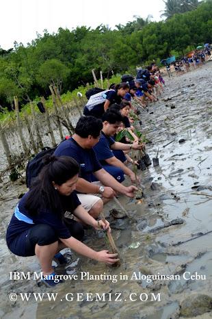 Mangrove Planting IBM Phiippines