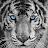 Kevin Miller avatar image