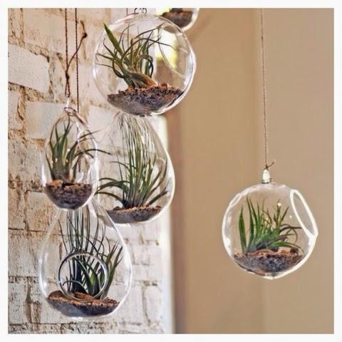 plantas ao ar