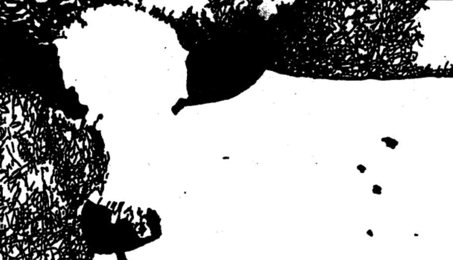 Resultado de imagem para buddhism plain and simple cow