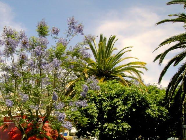 Ехать на Крит смотреть на пальмы
