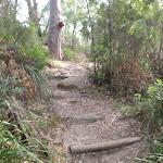 Steps in the Berowra Creek valley (64412)