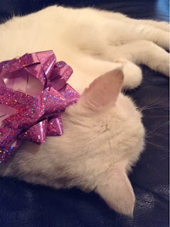 White cat wearing a purple sparkly bow