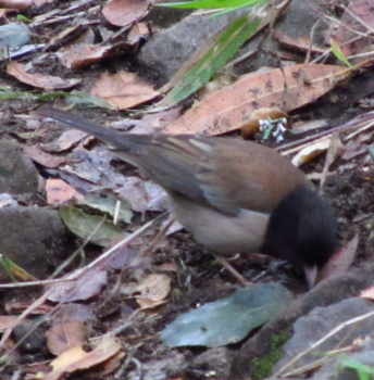 small bird foraging along the trail