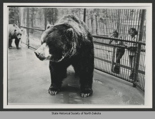 Urso pardo vs Urso polar - Página 2 Getimage