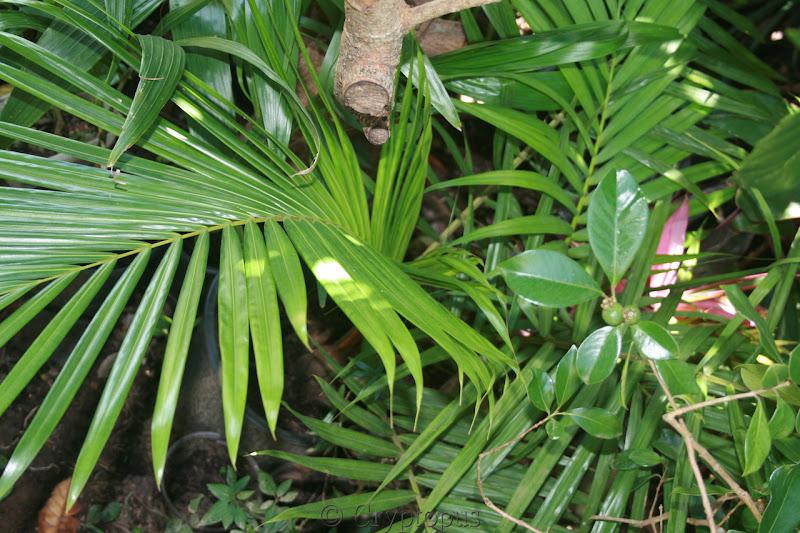 Futur jardin d'orchidées!!! - Page 2 IMG_3697