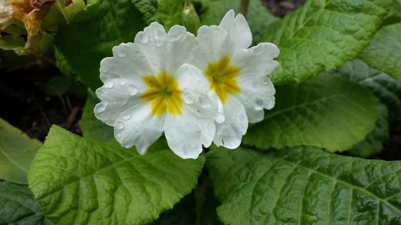ดอกไม้สีขาว ดอกเล็กๆ