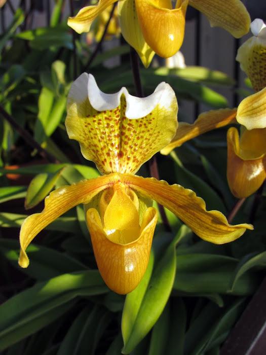 sapatinho flower