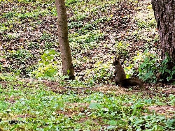 veverita parcul de sub arini sibiu