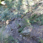 Track near Grose River (50372)
