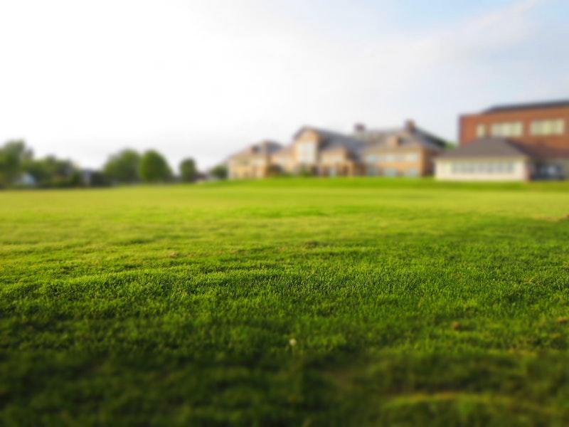 Healthy Grass.jpg Use Lawn Fertilizer for Healthy Grass