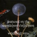 http://wildcraftvita.blogspot.it/2013/01/things-to-do-with-dandelions.html