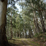 Walking through the tall wooded forest (290213)