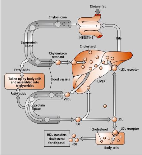 Endocrinología y Diabetes - SMACI AC