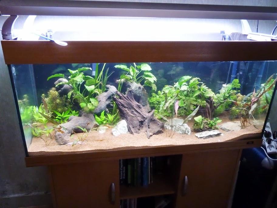 Ma petit histoire Aquariophile de 2009 à aujourd'hui  P1040118