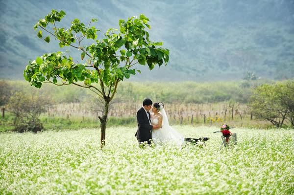 lãng mạn hoa cải trắng