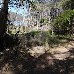 Track along Bournda Lagoon (105589)