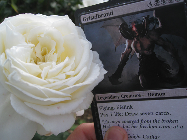 Oversized Griselbrand and a rose