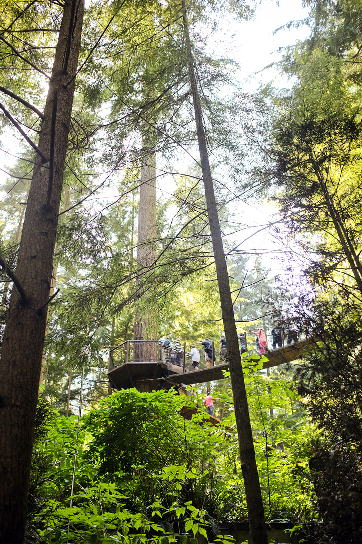 Treetops Adventures (Things to Do Vancouver).