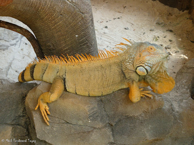 Sunway Lagoon - Wildlife Park Batch 4 Photo 7