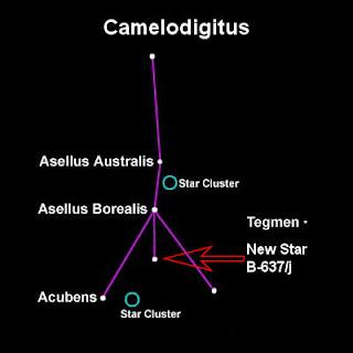 Camelodigitus