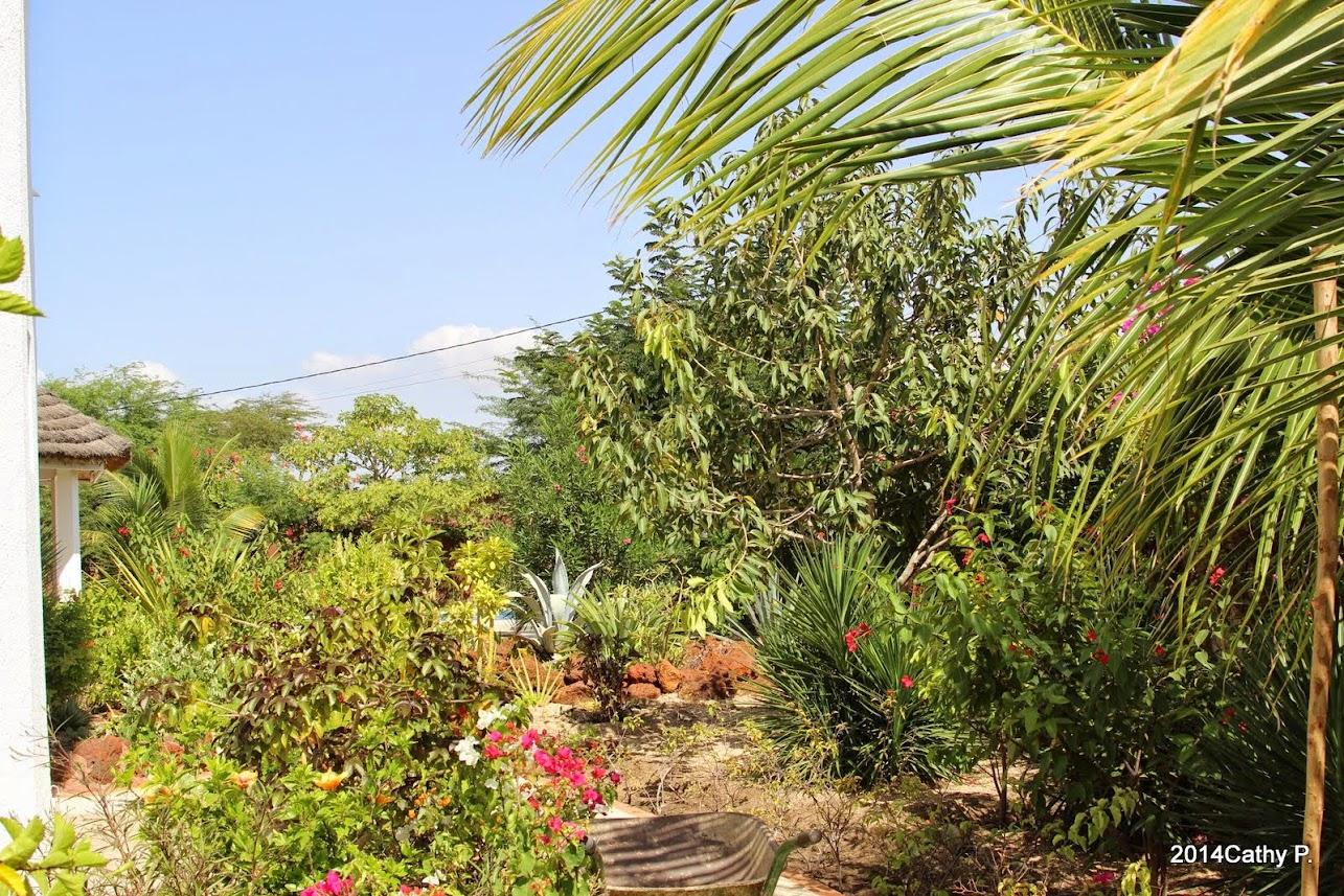 Mon jardin senegalais for Le jardin dakar