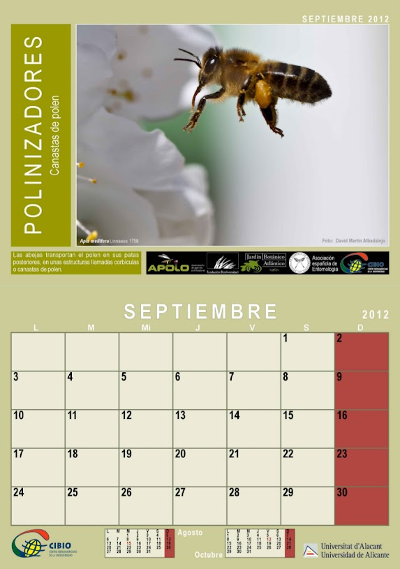 manatus foto blog abeja en vuelo