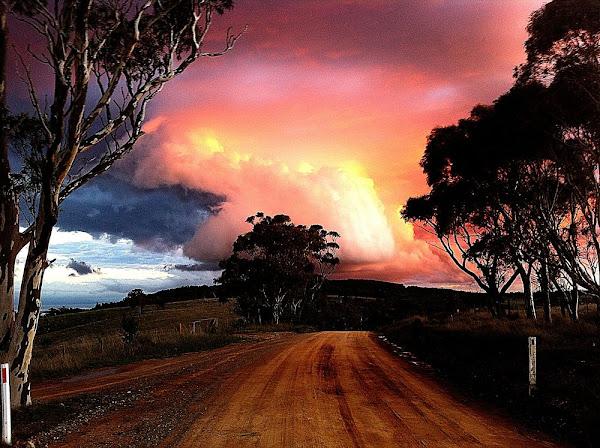 marked tree road