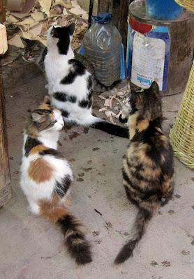 cat colony