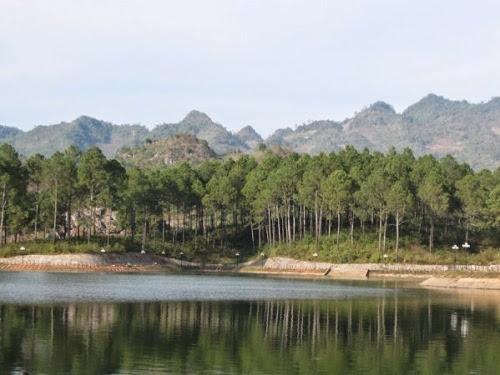 2 Du lịch Mộc Châu: ngút ngàn rừng thông Bản Áng