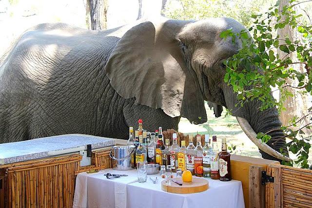 أفضل ما في أفريقيا  Best of Africa IMG_1595dan