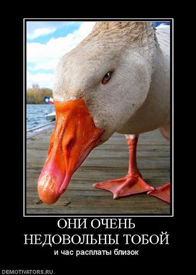 "Лидер ""Оплота"" Жилин причастен к организации покушения на Авакова, - Тандит - Цензор.НЕТ 9771"