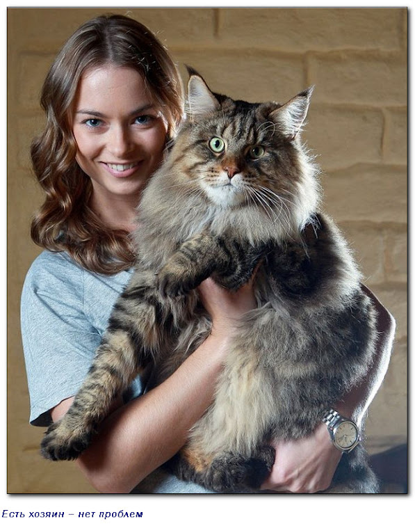 Кошка - посланец острова Запустения