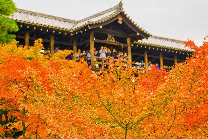 京都 東福寺 紅葉 写真4