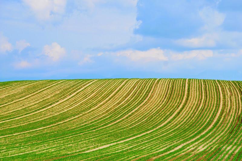 美瑛 ルベシベの丘 写真15