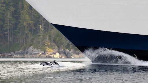Pacific White-Sided Dolphins and a Cruise Ship, Johnstone Strait, British Columbia.jpg