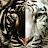 Kevin Figueroa avatar image