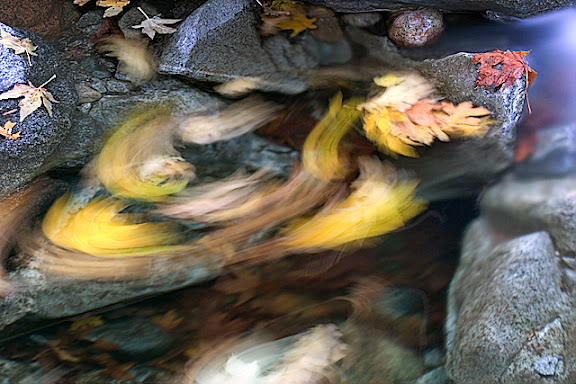 """""""Fall's Dance"""" by Artist Colin Wright. Photography."""
