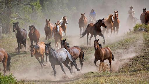 Horse Roundup, Montana.jpg