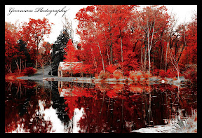 Reflection in water, playing with Colors. Autum afternoon, Gillete/Morristown New Jersey