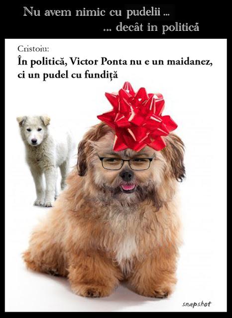 pudel politic