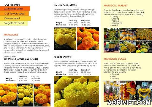 Agriviet.Com-ameriseed-products-2.jpg