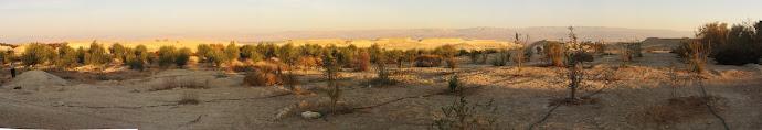 בית הכנסת שלום על ישראל