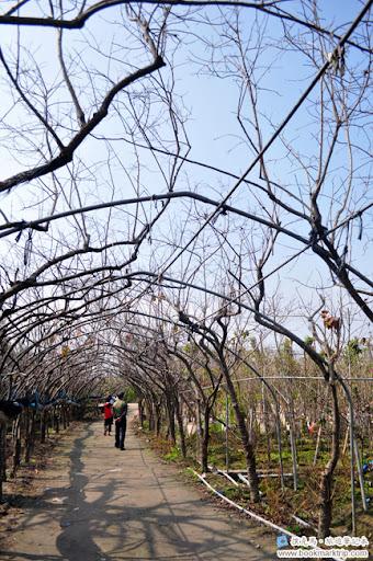 芬園花卉生產休憩園區 - 櫻花步道