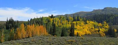 Fall colors along Miller Flat Road