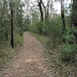 Pisgah Rock track (143634)