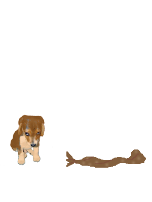 Psić - kralj