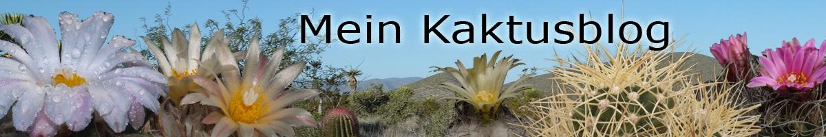Mein Kaktusblog